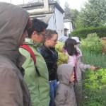 Cueillette des légumes au parc Montjoly