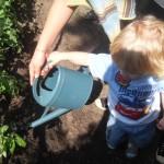 Plantation des légumes d'automne